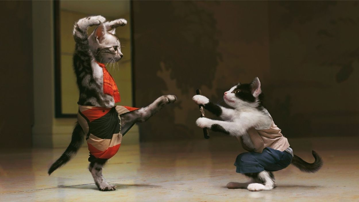 cats in karate fighting pose